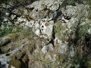 Kamenniy-les0