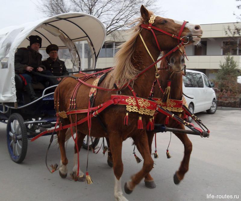 Всех желающих сотрудники Музея-заповедника М.А. Шолохова катают на лошадях