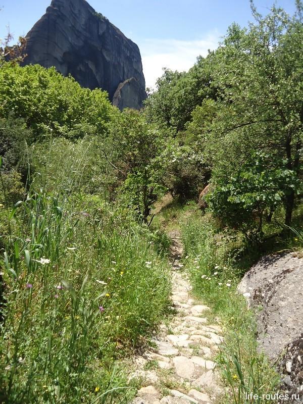 Из леса дорожка выводит на открытые пространства