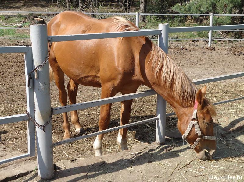 Донские лошади