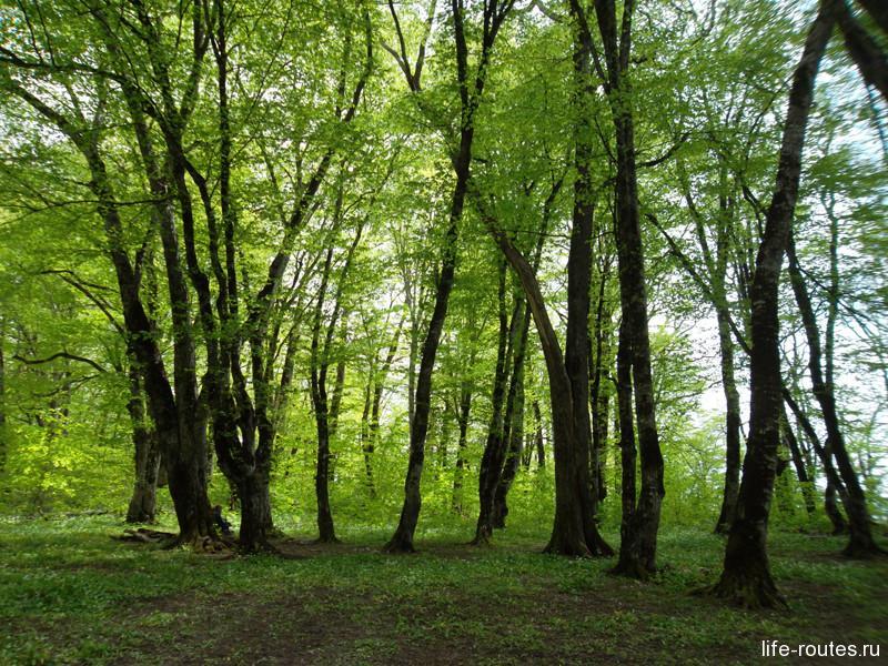 Лес в окрестностях полке создает таинственный полумрак