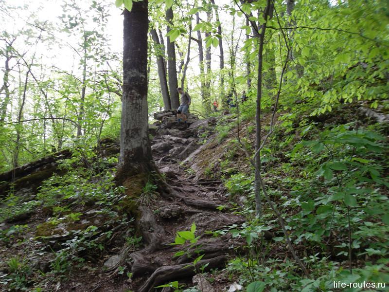 Конечно, не лестница, но идти, даже без подготовки, вполне можно. Спасают деревья и корни