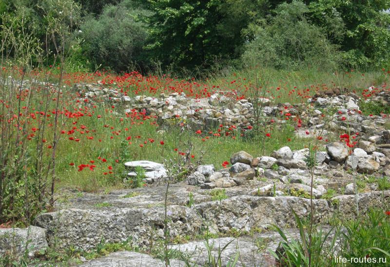 Повсюду на античных руинах цветут красные маки