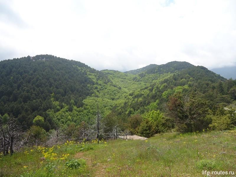 На склонах горы растет большое количество эндемиков