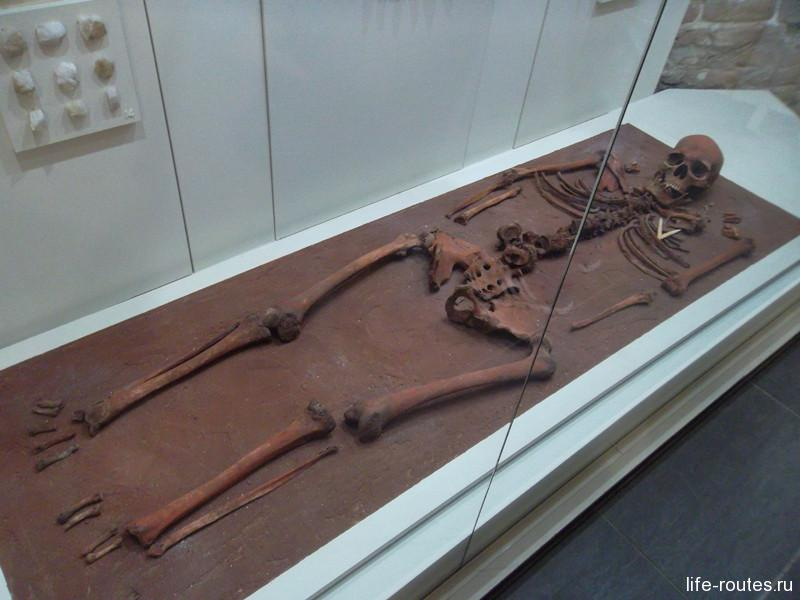 Останки местного жителя эпохи мезолита в Национальном музее Карелии