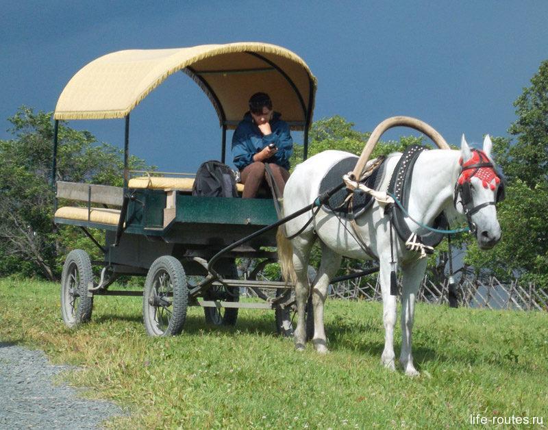 Бричка ждет желающих отправиться в северную часть острова Кижи