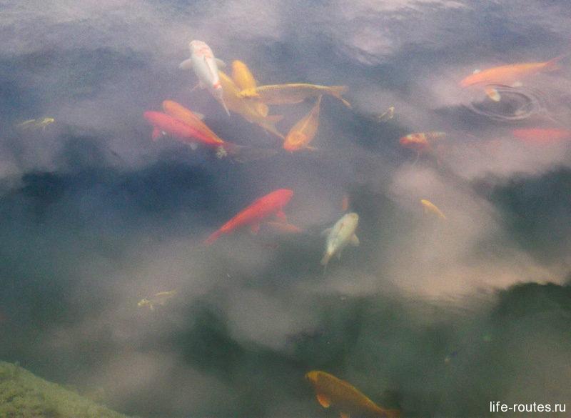 Рыбок в прудах много. Все разноцветные