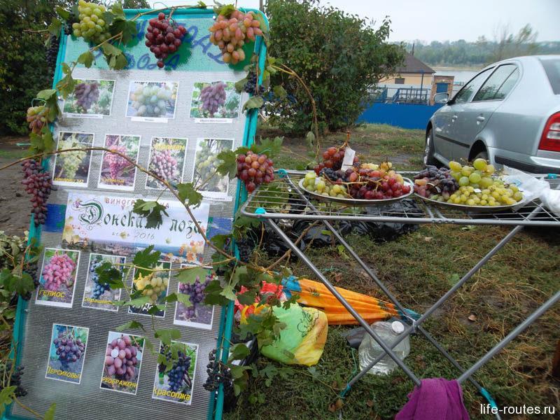 """Донской виноград знают далеко за пределами области. Самый популярный сорт """"Юбилей Новочеркасска"""", а вот """"Пухляковский белый"""" мы так и не нашли"""