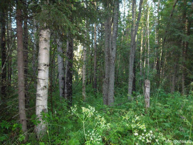 Со всех сторон тебя окутывает живописный лес