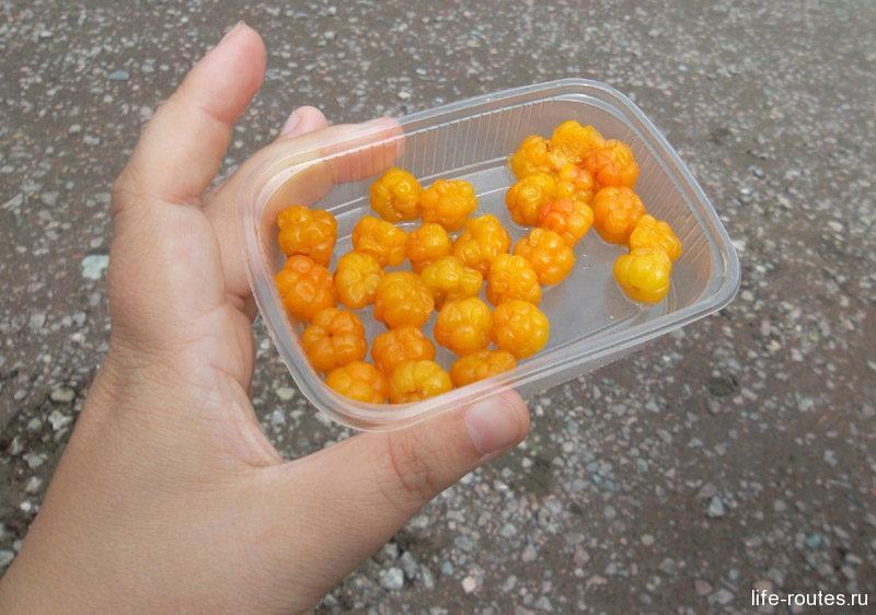 Морошка - одна из самых дорогих и редких ягод Карелии
