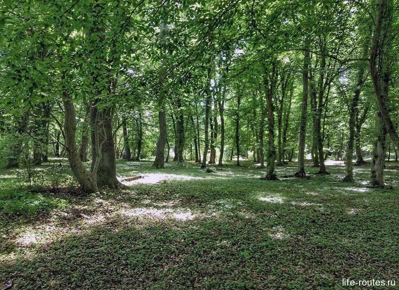 Самурский лиановый лес считается одним из последних реликтовых лесов мира