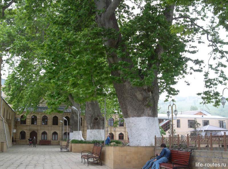 Платанам во дворе мечети порядка 1000 лет